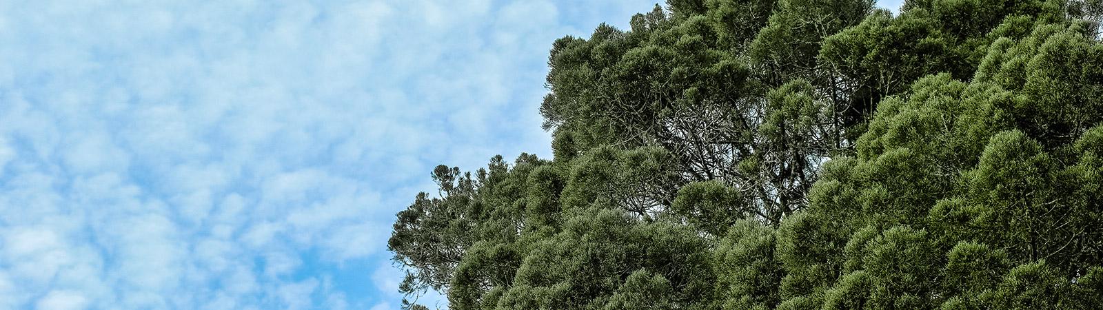 bosco temporaneo ex dogana